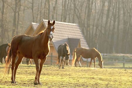 Portrait of a horse standing in the field in the rays of the setting sun photo