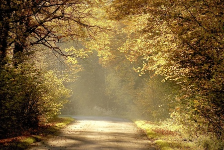 Rural road running through a misty autumn forest in the early morning photo