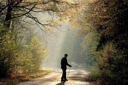 backlit: Landelijke weg door het mistige herfst bos bij zons opgang
