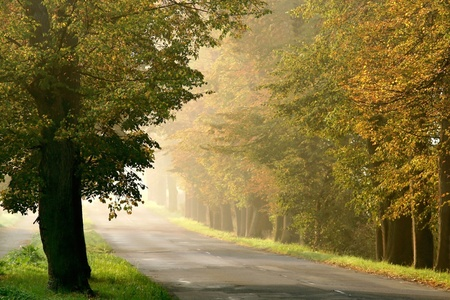 Rural road leading through the misty autumn forest at dawn photo
