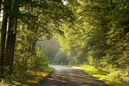 Rural road through rich deciduous forest illuminated by the morning sunlight photo