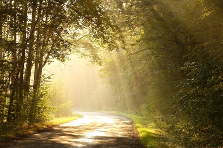 deciduous woodland: Lane leading through the misty autumn forest at dawn Stock Photo
