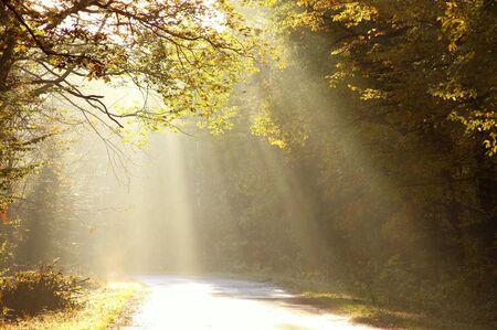 Sun rays cade sulla strada che conduce nella foresta di latifoglia nebbiosa paese