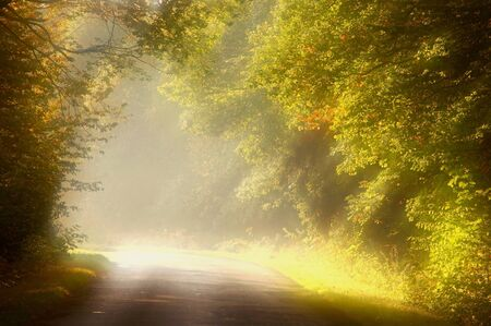 Rural road through rich deciduous forest backlit by the morning sunlight Stock Photo - 8470087