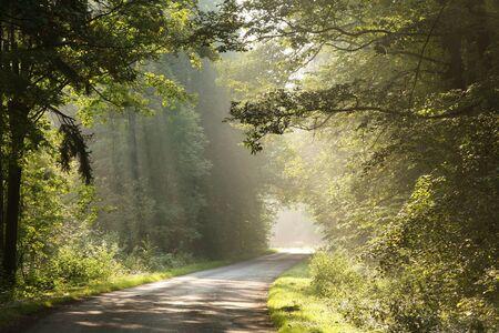 Carretera del pa�s en la ma�ana conducir por bosques de hoja caduca Foto de archivo