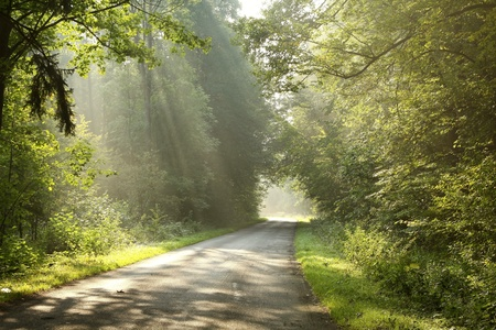 Country road in the morning lead by deciduous forest photo