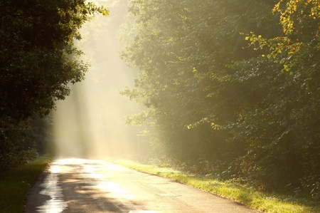 Sun rays falls on the country road leading into the misty deciduous forest photo