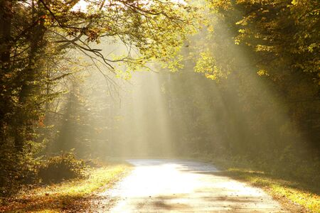 avenues: Sunlight falls on the rural road in the misty autumnal forest