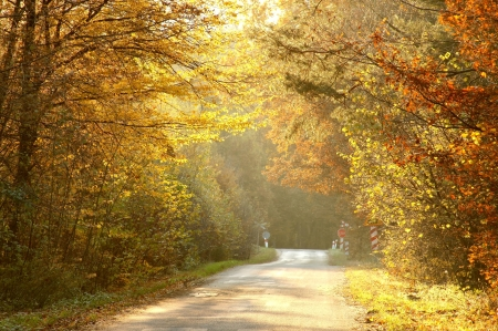 deciduous woodland: Country road through rich deciduous forest backlit by the setting sun Stock Photo