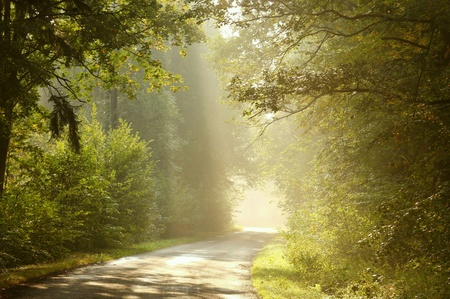 Country road in the morning lead by deciduous forest Stock Photo - 8473383