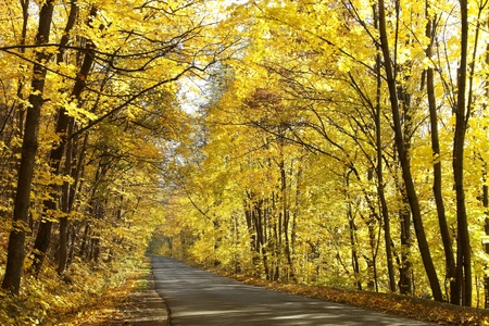 Forest lane leading among autumn maple trees on a sunny morning photo