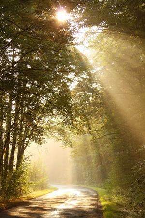 Sonnenlicht fällt auf den ländlichen Straßen in den nebligen herbstlichen Wald Standard-Bild