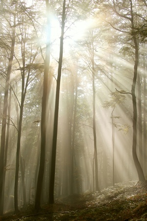 Sunlight entering the beech forest on a misty autumn morning photo
