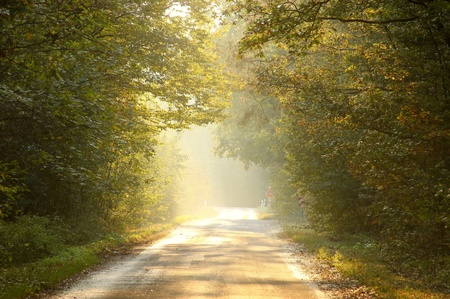 Country road through rich deciduous forest backlit by the setting sun photo