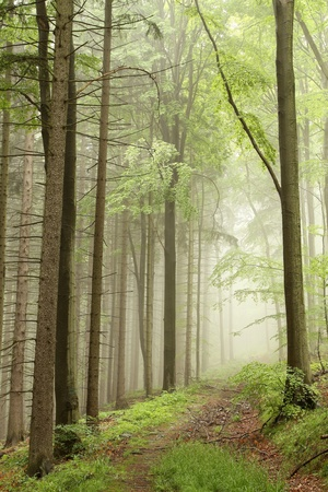 Path leading through the misty spring forest in a nature reserve Stock Photo
