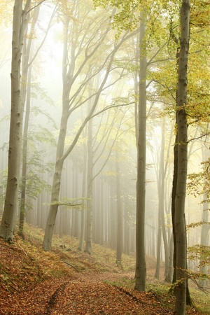 Path leading through the autumn forest on a misty morning photo