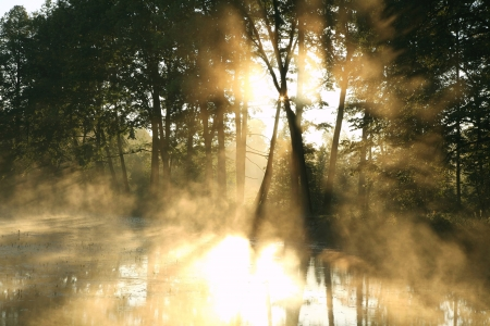 deciduous woodland: Rising sun enters the deciduous forest surrounded by mist