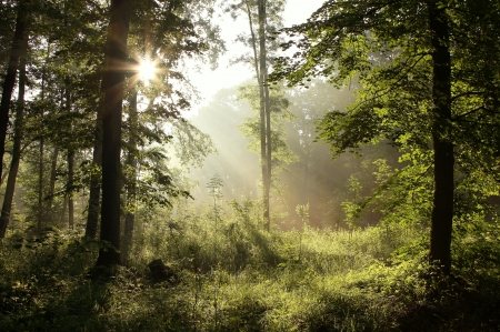 Frühlings-Wald nach dem Regen mit Eichen im Gegenlicht der Morgensonne Standard-Bild