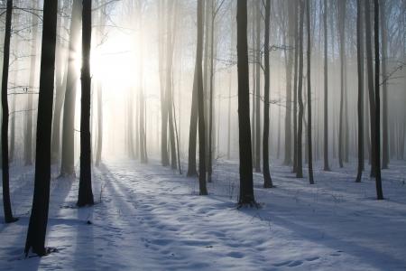 Pad in de mistige winter bos verlicht door de ochtendzon