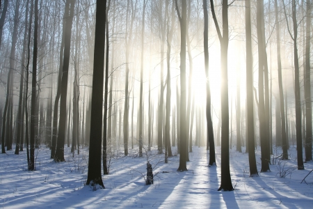 sunny cold days: Winter forest on a foggy December s morning Stock Photo