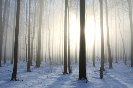 Winter deciduous forest on a foggy December s morning photo