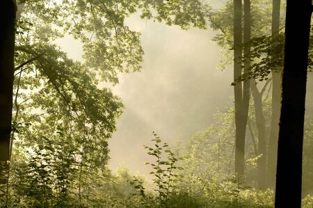 Misty spring deciduous forest lit by the rising sun photo
