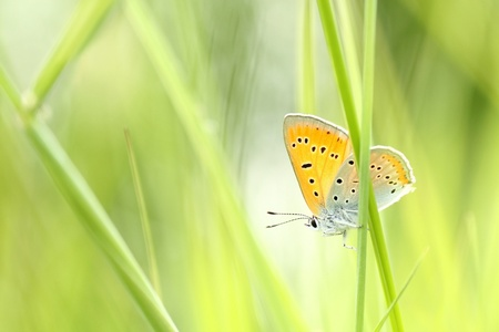 Butterfly on a spring meadow in the sunshine Stock Photo - 14416237
