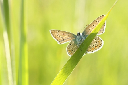 Butterfly on a spring meadow in the sunshine photo