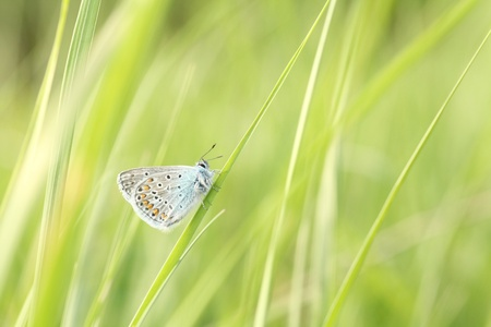 Butterfly on a blade of grass in a spring morning photo