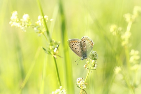 Closeup of a butterfly in spring meadow photo