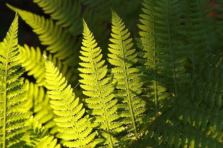 Fern in the forest backlit by the morning sun photo