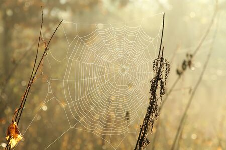 Spider web in a meadow on a foggy morning photo