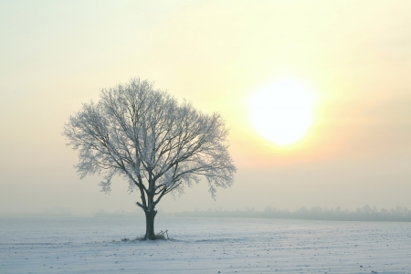 standing alone: A tree covered in frost standing alone on the field Stock Photo