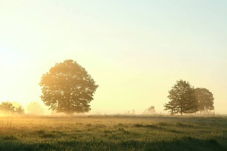 Trees in the meadow on a misty May morning photo