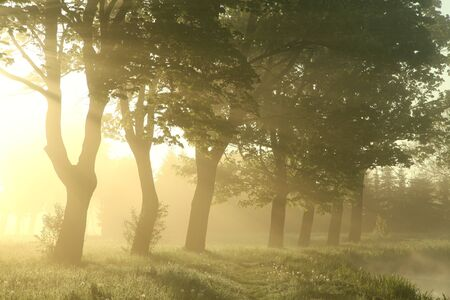 Trees in the meadow lit by the morning sun photo