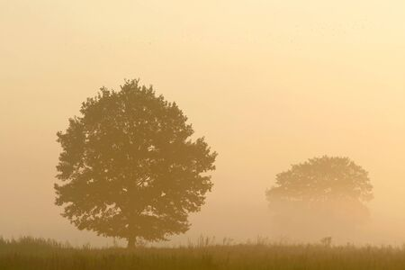 Tree in a meadow on a foggy autumn morning photo