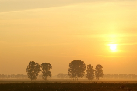 Misty sunrise over the trees in the field of rapeseed photo