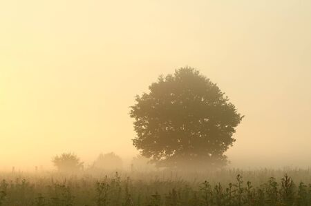 Tree in a meadow lit by the sunlight on a foggy summer morning photo