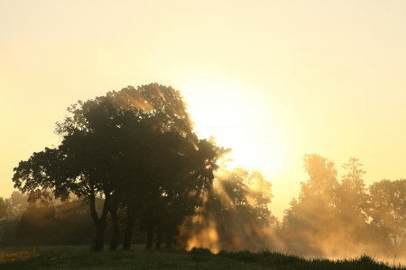 Sunrise over the trees growing near the lake on a foggy autumn day photo