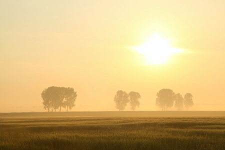 Sunrise over the field with trees surrounded by mist photo