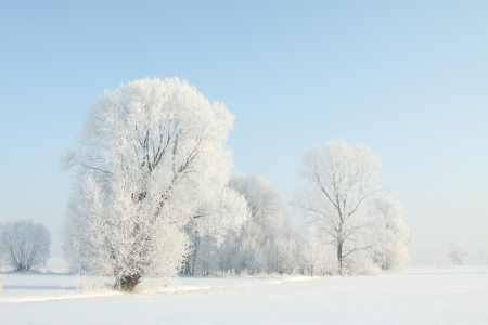 Winter landscape of frosted trees against a blue sky on a sunny morning