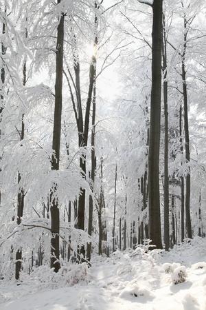 buche: Landschaft im Winter Buchenwald am Berghang Lizenzfreie Bilder