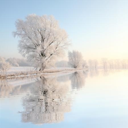 Frosty Winter Baum von der aufgehenden Sonne beleuchtet Standard-Bild