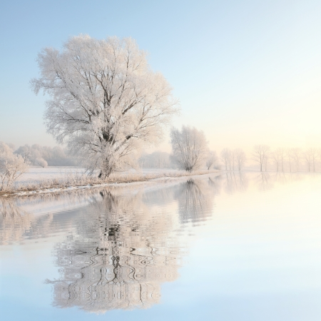 Frosty winter tree illuminated by the rising sun