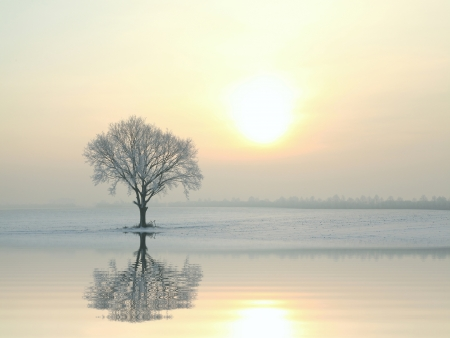 december sunrise: A tree covered in frost standing alone on the field Stock Photo