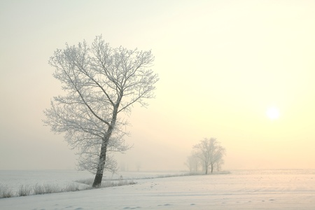 Winter sunrise over a field with frozen tree in the foreground photo