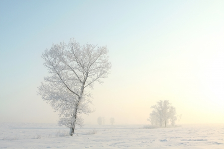 Frosty winter tree standing alone in the field on a foggy December s morning
