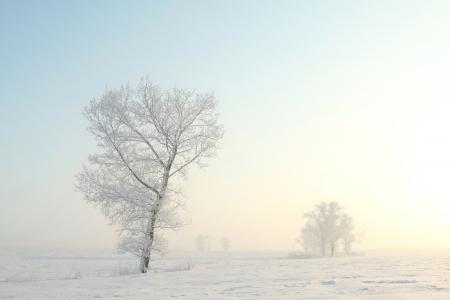 �rbol invierno Frosty por s� solo en el campo en una ma�ana brumosa diciembre s
