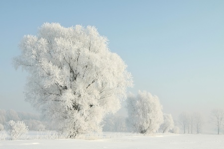 Frosted trees against a blue sky on a sunny morning photo