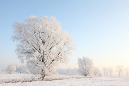 Frosty winter willow against the blue sky at dawn photo